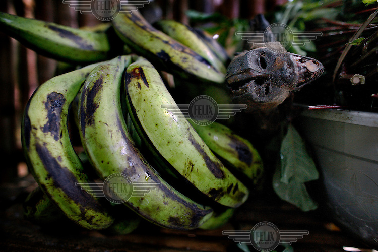 A smoked monkey and plantain bananas in Yamgambi market. Bushmeat is popular in Congo and an important source of protein which many lack in their diet, but, it is expensive and usually beyond the means of most.
