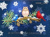 Randy, CHRISTMAS SYMBOLS, WEIHNACHTEN SYMBOLE, NAVIDAD SÍMBOLOS, paintings+++++Wintering-Birds-Winter-Watch-print,USRW218,#xx#