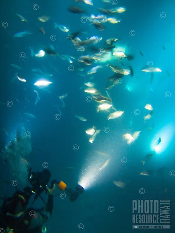 A scuba diver films fish at night during a manta ray feeding, Big Island.