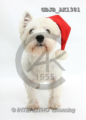 Kim, CHRISTMAS ANIMALS, photos(GBJBAK1381,#XA#) stickers