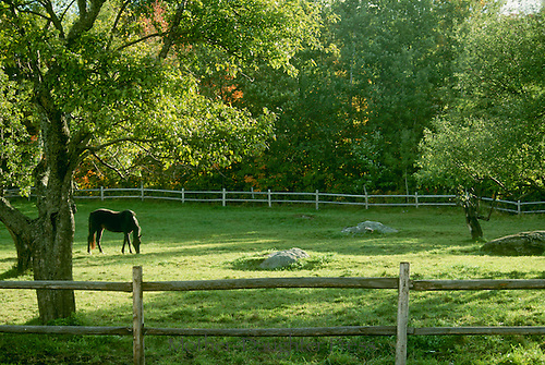 Horse in pasture in deep summer and late afternoon