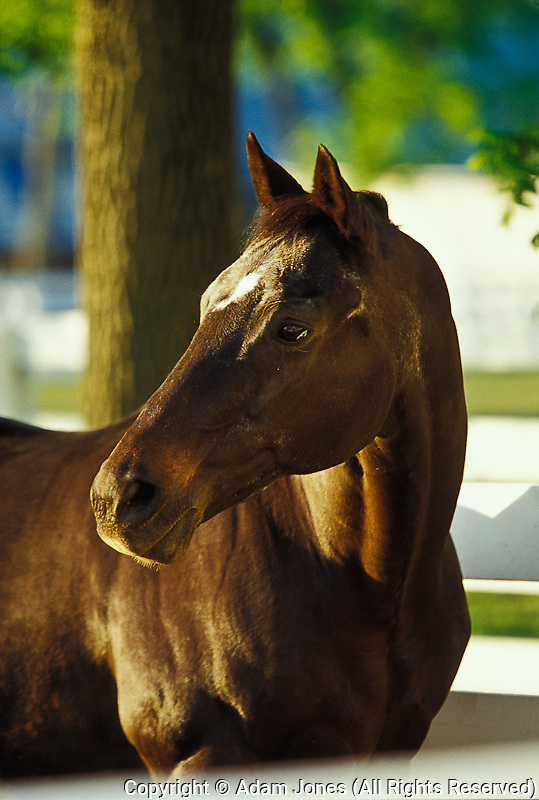 Retired Kentucky Derby winner, Bold Forbes, Kentucky Horse Park, Lexington, KY