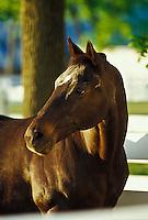 Retired Kentucky Derby winner, Bold Forbes, Kentucky Horse Park, Lexington, KY