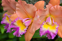 Colorful Orchid flowers