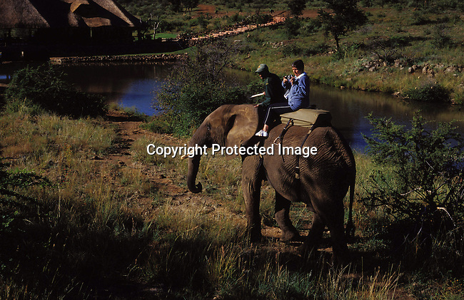 diwlele00006.Wildlife. Elephants. Tourists riding on elephants with Pilanesberg Elephant Back-Safaris on May 10, 2003 in Pilanesberg, a game park outside Sun City, South Africa. These elephants and handlers come from Zimbabwe and it has become a popular tourist attraction in the area. Animals, nature, trunk, tusks. .©Per-Anders Pettersson/iAfrika Photos.