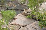A leopard rests on a kopje in Maasai Mara in Kenya.