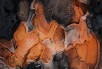 """SURVIVOR""<br />