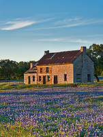 Golden Glow Over Bluebonnets Farmhouse - Another capture of this iconic site in a  vertical view of the bluebonnet farm house with a golden glow out in the texas hill country just before sunset. This field of bluebonnet still has the old rusting farm equipment in front of this old stone farm house as they were left many years ago when it was last farmed. I am no specialist on farm equipment but these look like they would of been pulled by a mule or pushed by human power. This is farm house is a favorite of people on the hunt for wildflowers many who come from all around who want to capture the photo. Among the field of bluebonnets were also a sprinkling of Indian Paintbrush for a pop of red. This place over the years has turned into a tourist destination for wildflowers photos.