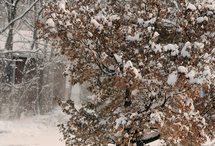 Snow seen around our apartment in Saugerties, NY, on Monday, December 25, 2017. Photo by Jim Peppler. Copyright/Jim Peppler/2017.