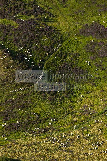 Europe/France/Auverne/63/Puy-de-Dôme/Parc Naturel Régional des Volcans: Depuis le Sommet du Puy de Dome  vue sur les motons en paturage dans la  Chaîne des Puys