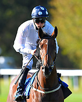 Clara Peters ridden by Jason Watson goes down to the start of The Radcliffe & Co EBF Novice Stakes Div 2  during Afternoon Racing at Salisbury Racecourse on 3rd October 2018