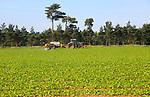 Tractor crossing field spraying crop, Sutton, Suffolk, England, UK