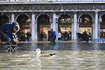 Tourist takes a pbird in picture on flooded St Mark's square during an acqua alta (high-water). The Acqua Alta, a convergence of high tides and a strong sirocco, reached 125 centimetres in Venice, on November 20, 2013.  <br /> <br /> &copy; Pierre Teyssot