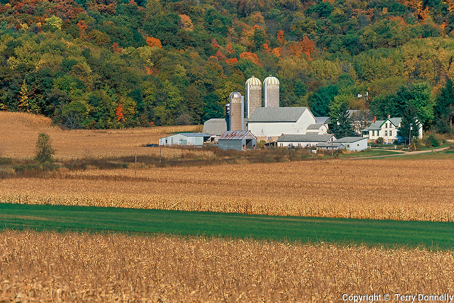Sauk County, WI<br /> Farm scene with dried cornfields under fall colored Baraboo Hills