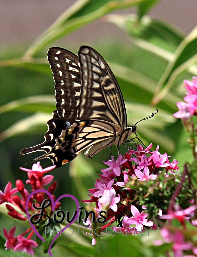 Butterfly in Maui, Hawaii