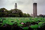 Tokyo, 2005. Lotus flower in Uneo park.