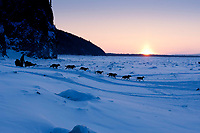 Dallas Seavey drops down the bank onto the Yukon River shortly after leaving the village checkpoint of Ruby at sunset in Interior Alaska during the 2010 Iditarod