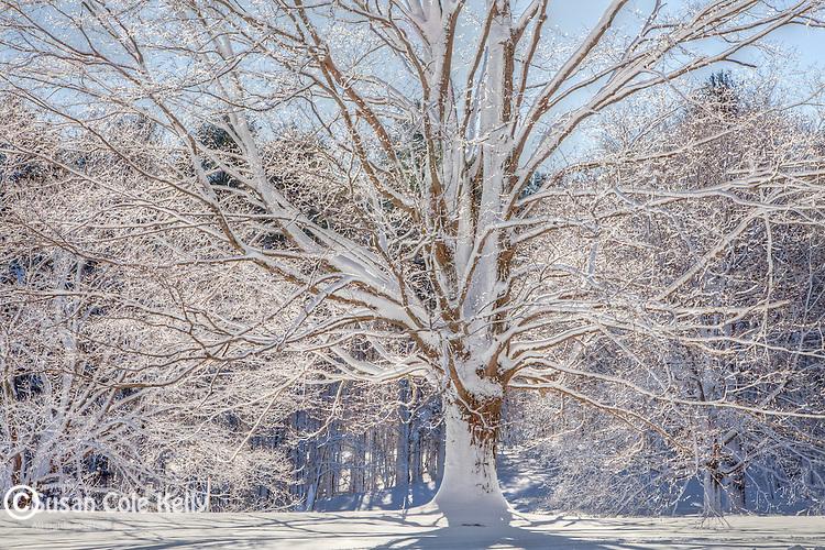 Fresh snow at Appleton Farm in Ipswich, MA, USA