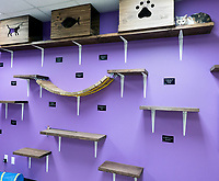The cat's meow. <br /> A room originally filled with cages for Sarnia Human Society's large cat population has been transformed into a cat lounge and play area. The room received the makeover as a Lambton College 50th anniversary legacy project. The cat room features numerous wall shelves for cats to rest, a large tree branch which they can scratch and climb on, plus lots of toys. A big hit with the feline residents is the Cat Haven an outdoor caged area where cats  experience the great outdoors by just climbing through an open window. The Cat Haven was provided by a donation from Terry McCarthy in recognition for all the joy and happiness cats have given during her lifetime.