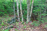 The Meader Farm home site cellar hole along Sandwich Notch Road in Sandwich, New Hampshire. During the early nineteenth century, thirty to forty families lived in the Notch. And by the turn of the twentieth century only one person remained in the Notch year around.