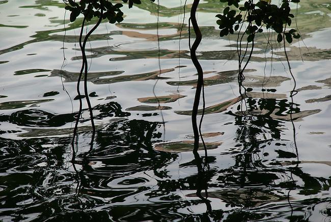 Hanoi, Vietnam  Hoan Kiem Lake reflections below a tree. photo taken July 2008.