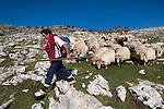 Basque shepherd Inaki Armendariz performs the transhumance with his around 600 sheeps flock from the mountains of Aralar all the way to Arroagaina, near the coastal town of Zumaia, on a three days' journey on August, 25th 2010. This shepherd was born in Zaldibia and he is one of the few Basque shepherds that performs transhumance walking with his flock crossing roads and mountains to his destination in Arroagaina to stay there during winter time. Inaki performs  transhumance twice a year going down to Arroagaina for winter and going up to Aralar mountains for spring time. (Ander Gillenea / Bostok Photo)