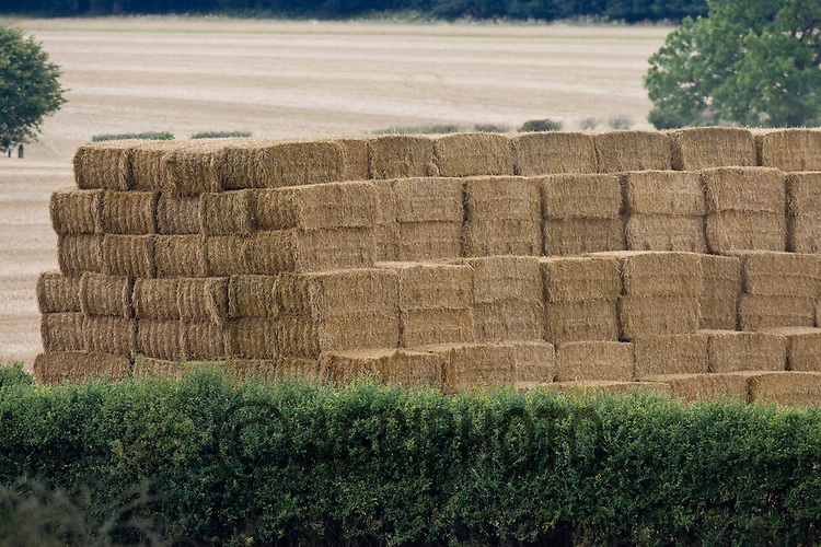 Straw stacked in the fields.©Tim Scrivener,Vine Cottage,Barholm,Stamford,.Lincolnshire,PE9 4RA.