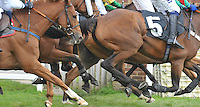 Plumpton - Ladies Day 18.9.11