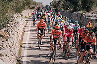 John Degenkolb (DEU/Trek-Segafredo) in the bunch<br /> <br /> 27th Challenge Ciclista Mallorca 2018<br /> Trofeo Campos-Porreres-Felanitx-Ses Salines: 176km