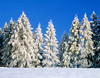 DEU, Bayern, Oberbayern, Berchtesgadener Land, Winterlandschaft - verschneite Tannen | DEU, Bavaria, Upper Bavaria, Berchtesgadener Land, Winter scenery - snow covered firs