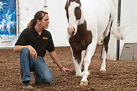 Cavalia performer Julien Beaugnon directs his horse, Junior, with simple hand movements and voice commands during an media preview on July 13, 2012. The horses of Cavalia arrived in San Jose, at their signature White Big Top, for performances through August.