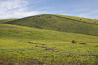 Quail Hill Trail Scenic Loop Trail