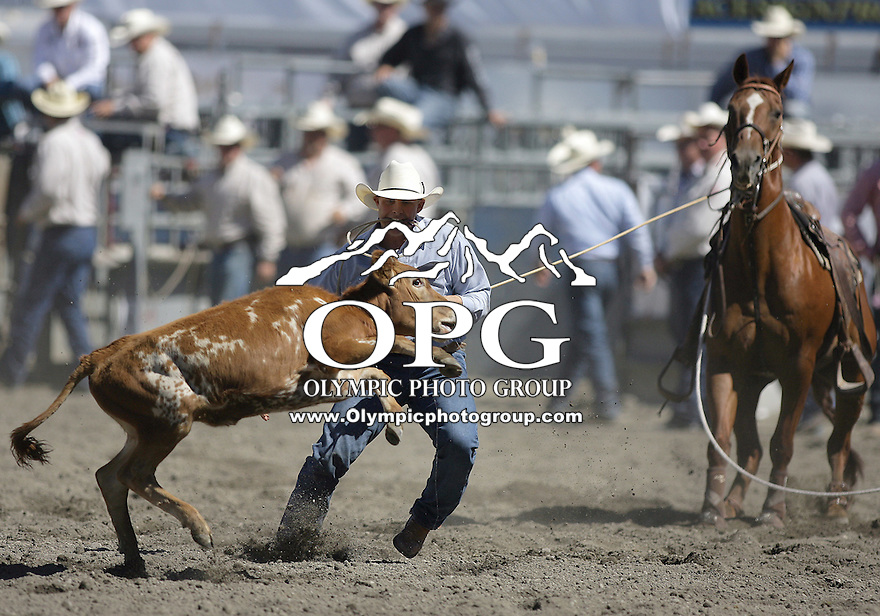 25 Aug 2010:  Ty Sturza scored a time of 24.3 in the Tie Down Roping slack matinee competition at the Kitsap County Stampede Wrangle Million Dollar PRCA Silver Rodeo Tour in Bremerton, Washington.