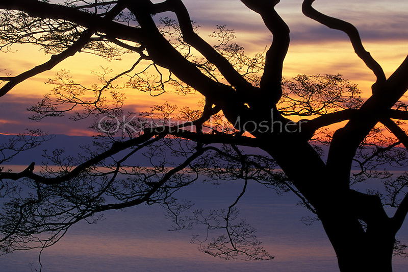 Sunset from the forest. Lake Tanganyika, Gombe National Park, Tanzania