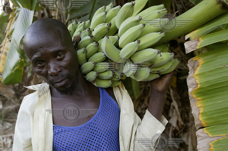 Small farmer with a thriving banana plantation in the Kariba Lake area. He is unable to sell his bananas because the nearest road is many kilometres away.