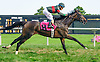 Inchargeofme winning at Delaware Park on 8/11/16