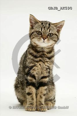 Kim, ANIMALS, fondless, photos(GBJBAK590,#A#) Tiere ohne Fond, animales sind fondo