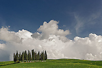 Distinctive cypress trees in Tuscany region of Italy.