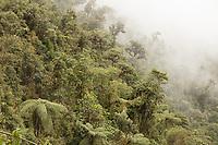 Temperate Cloud Forest; Ecuador, Prov. Zamora-Chinchipe, Tapichalaca Reserve
