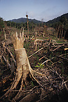 Slash & Burn cultivation Dayak Habitation Sarawak