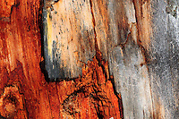 &quot;WOUNDED TREE<br />