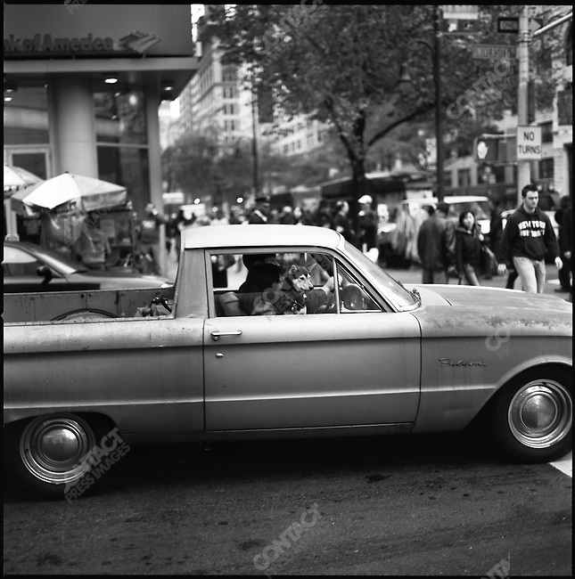 A dog looked out of a vintage Ford Falcon Ranchero onto Union Square. New York City, New York, November 14, 2008