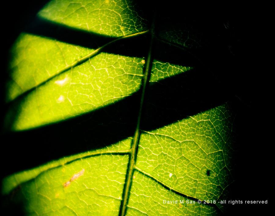 8.9.17 - Backlit Shadow.....
