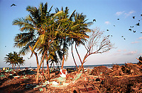 Debris in a beach in Nagapattinam.India.