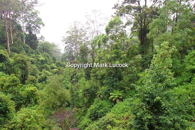 Dorrigo National Park, NSW