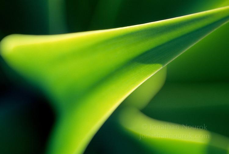 close-up of a succulent