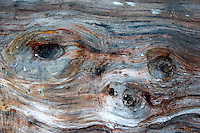 The look of a face in wood.  Zawady  Central Poland