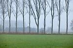 Europa, DEU, Deutschland, Nordrhein Westfalen, NRW, Rheinland, Niederrhein, Wachtendonk, Morgendunst, Landschaft, Dunst, Baeume, Haus, Wohnhaus, , Kategorien und Themen, Natur, Umwelt, Landschaft, Landschaftsfotos, Landschaftsfotografie, Landschaftsfoto, Wetter, Wetterelemente, Wetterlage, Wetterkunde, Witterung, Witterungsbedingungen, Wettererscheinungen, Meteorologie, Wettervorhersage......[Fuer die Nutzung gelten die jeweils gueltigen Allgemeinen Liefer-und Geschaeftsbedingungen. Nutzung nur gegen Verwendungsmeldung und Nachweis. Download der AGB unter http://www.image-box.com oder werden auf Anfrage zugesendet. Freigabe ist vorher erforderlich. Jede Nutzung des Fotos ist honorarpflichtig gemaess derzeit gueltiger MFM Liste - Kontakt, Uwe Schmid-Fotografie, Duisburg, Tel. (+49).2065.677997, archiv@image-box.com, www.image-box.com]
