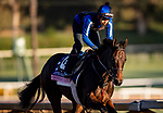 OCT 28: Breeders' Cup Juvenile Fillies entrant Donna Veloce, trained by Simon Callaghan, at Santa Anita Park in Arcadia, California on Oct 28, 2019. Evers/Eclipse Sportswire/Breeders' Cup