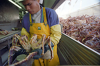 "A processor halves a red king crab at the Unisea processing plant in Dutch Harbor, Alaska in October 1994.  The Bering Sea is known for having the worst storms in the world. Crab fishing in the Bering Sea is considered to be one of the most dangerous jobs in the world.  This fishery is managed by the Alaska Department of Fish and Game and is a sustainable fishery.  The Discovery Channel produced a TV series called ""The Deadliest Catch"" which popularized this fishery."